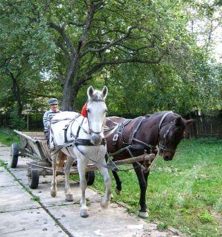 Horse and caruta is still a common sight in rural Transylvania