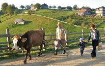 Taking the child to school, and the cow to pasture