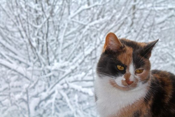 Hobbs, cat, Transylvania, Magura Transylvania, Romanian winter, Romania, snow, February, Carpathian Mountains, Piatra Craiului