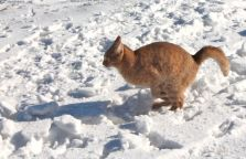Magura Transylvania, cats, snow, cat playing in snow