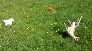 Dolly & Dug schnüffeln - Evita fühlt sich einfach groovy!!!