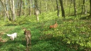 Der Wald war so richtig grün - nun sind fast alle Blätter aufgefaltet.
