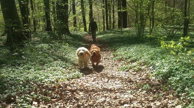 Dolly & Dug - und im Schlepptau: Kea!