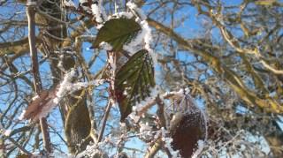 20170107-erste_winterspuren-natur-09