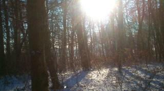 20170107-erste_winterspuren-natur-17