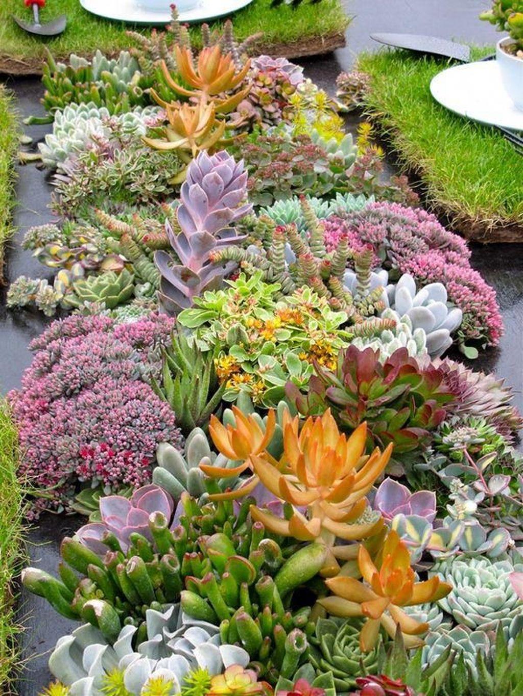 Incredible Cactus Garden Landscaping Ideas Best For Summer 02