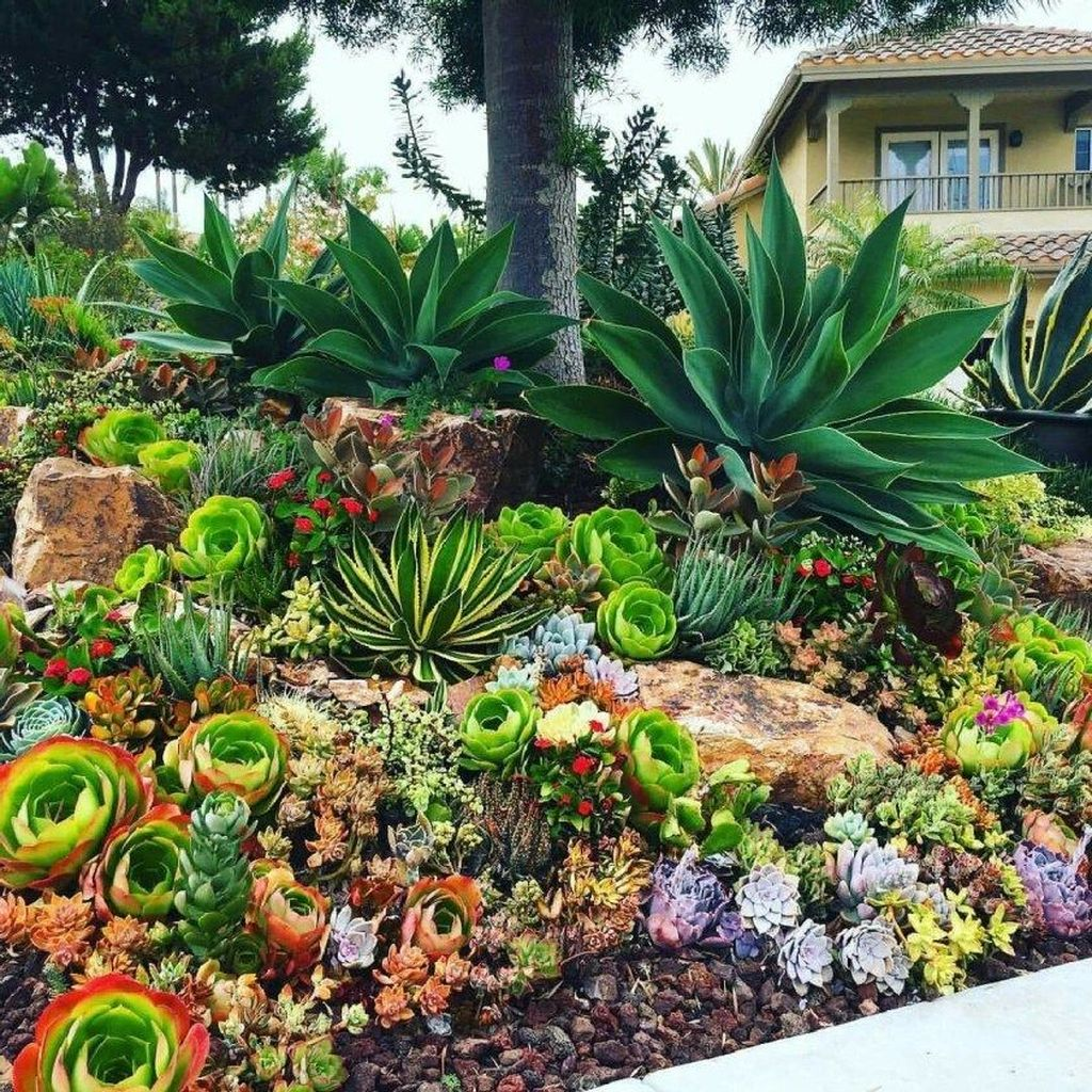 Incredible Cactus Garden Landscaping Ideas Best For Summer 04