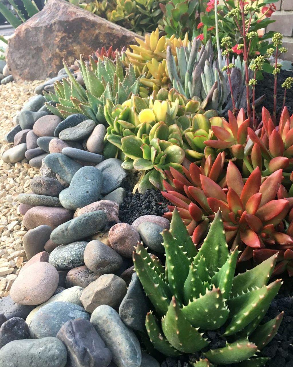 Incredible Cactus Garden Landscaping Ideas Best For Summer 18