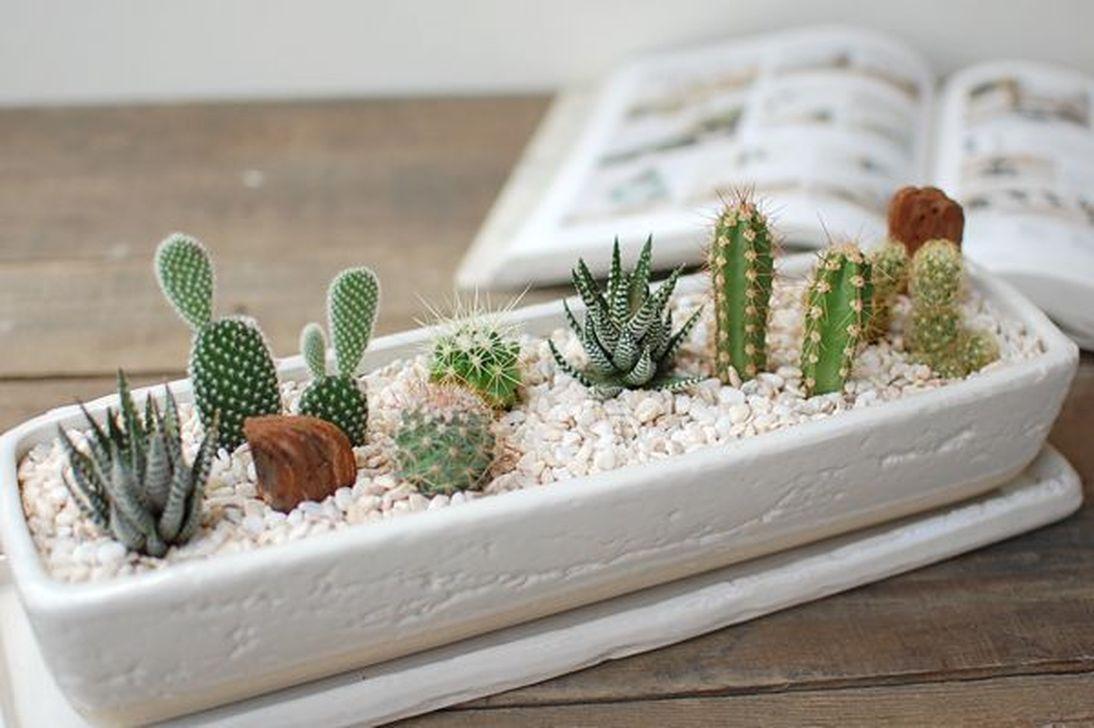Incredible Cactus Garden Landscaping Ideas Best For Summer 31