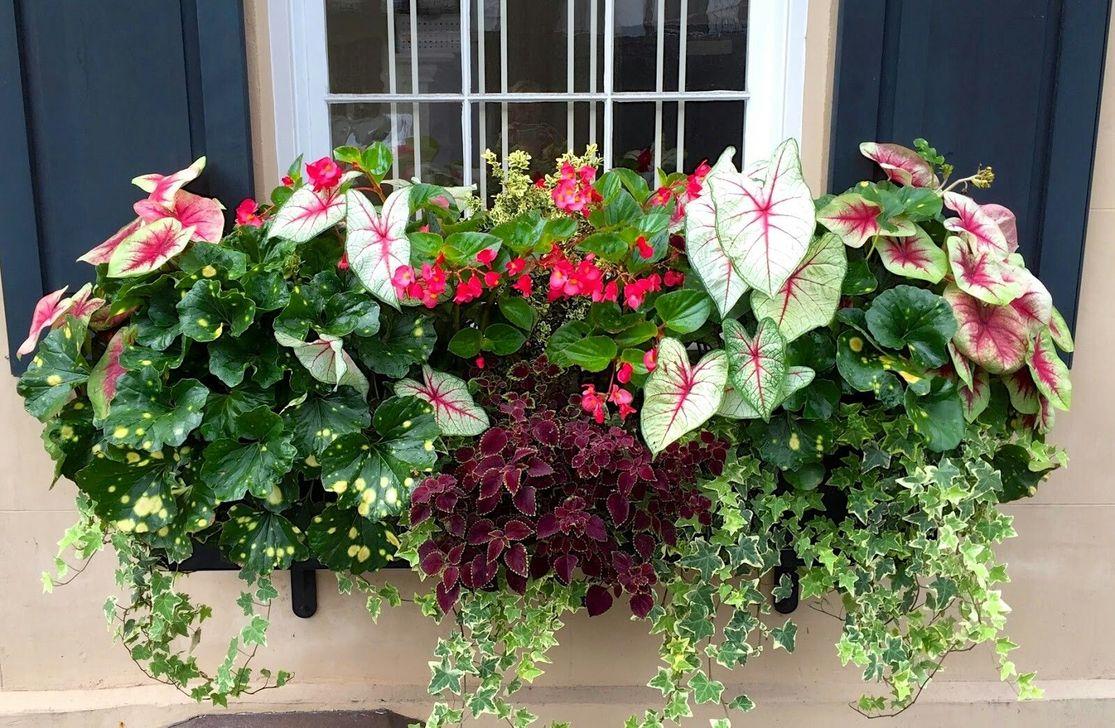 Beautiful Fall Window Boxes Design Ideas 16