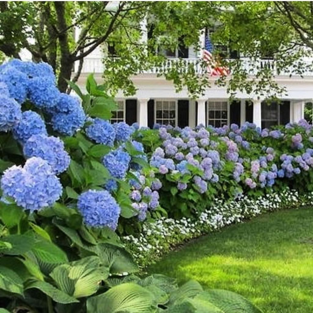 Beautiful Hydrangea Design Ideas Landscaping Your Front Yard 07