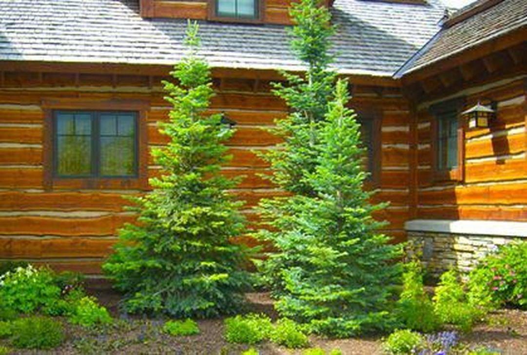 Wonderful Evergreen Landscape Ideas For Front Yard 25