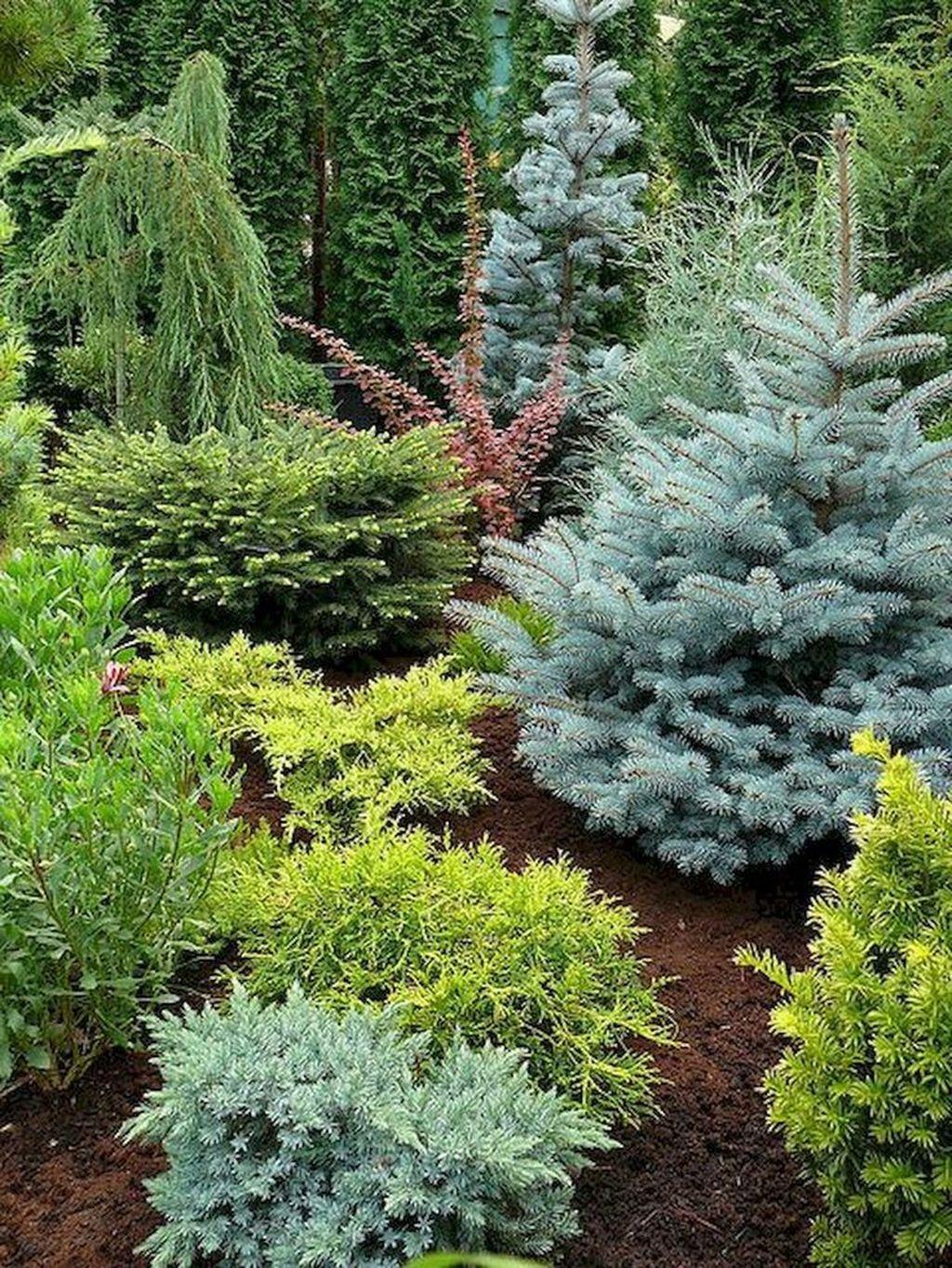 Wonderful Evergreen Landscape Ideas For Front Yard 26