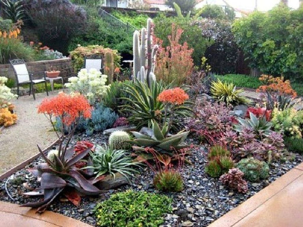 36 Beautiful Cactus Landscaping Ideas For Your Front Yards Decor