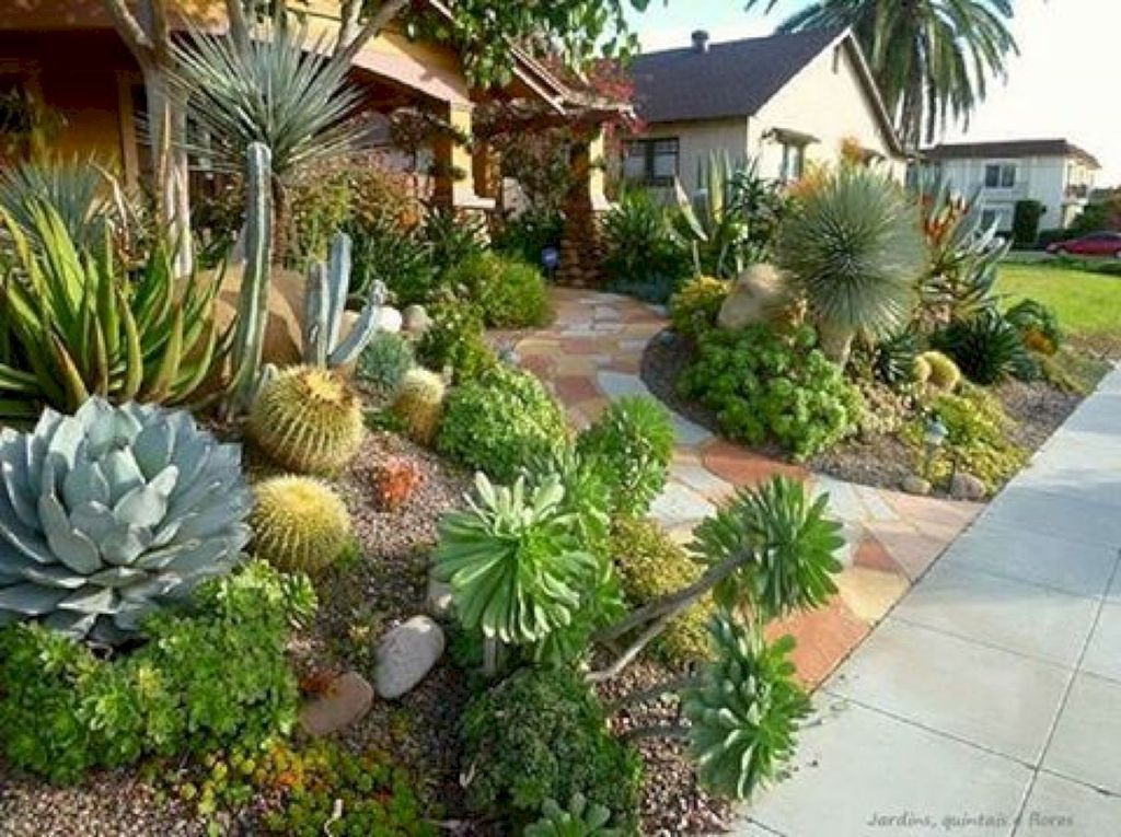 Beautiful Cactus Landscaping Ideas For Your Front Yards Decor 07