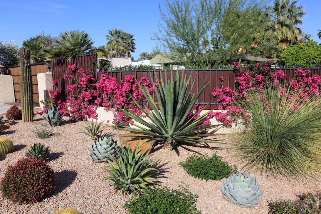 Beautiful Cactus Landscaping Ideas For Your Front Yards Decor 20