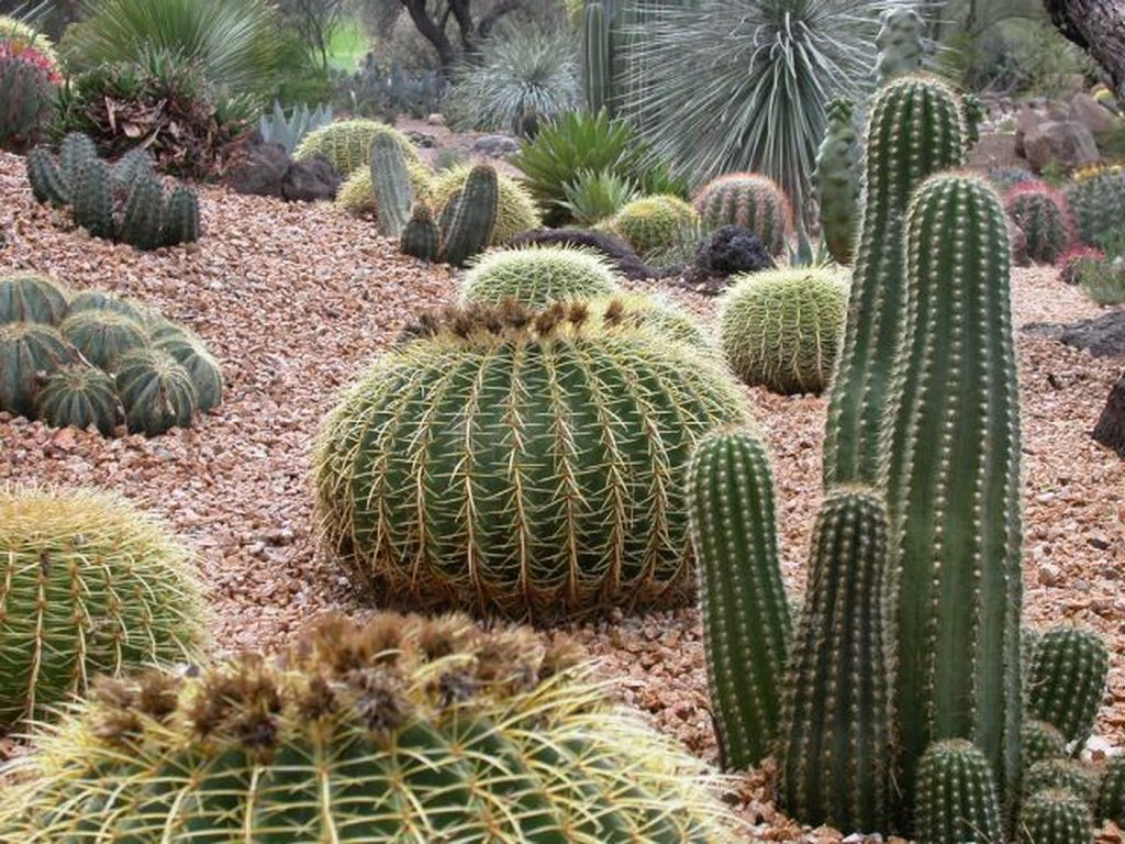 Beautiful Cactus Landscaping Ideas For Your Front Yards Decor 22
