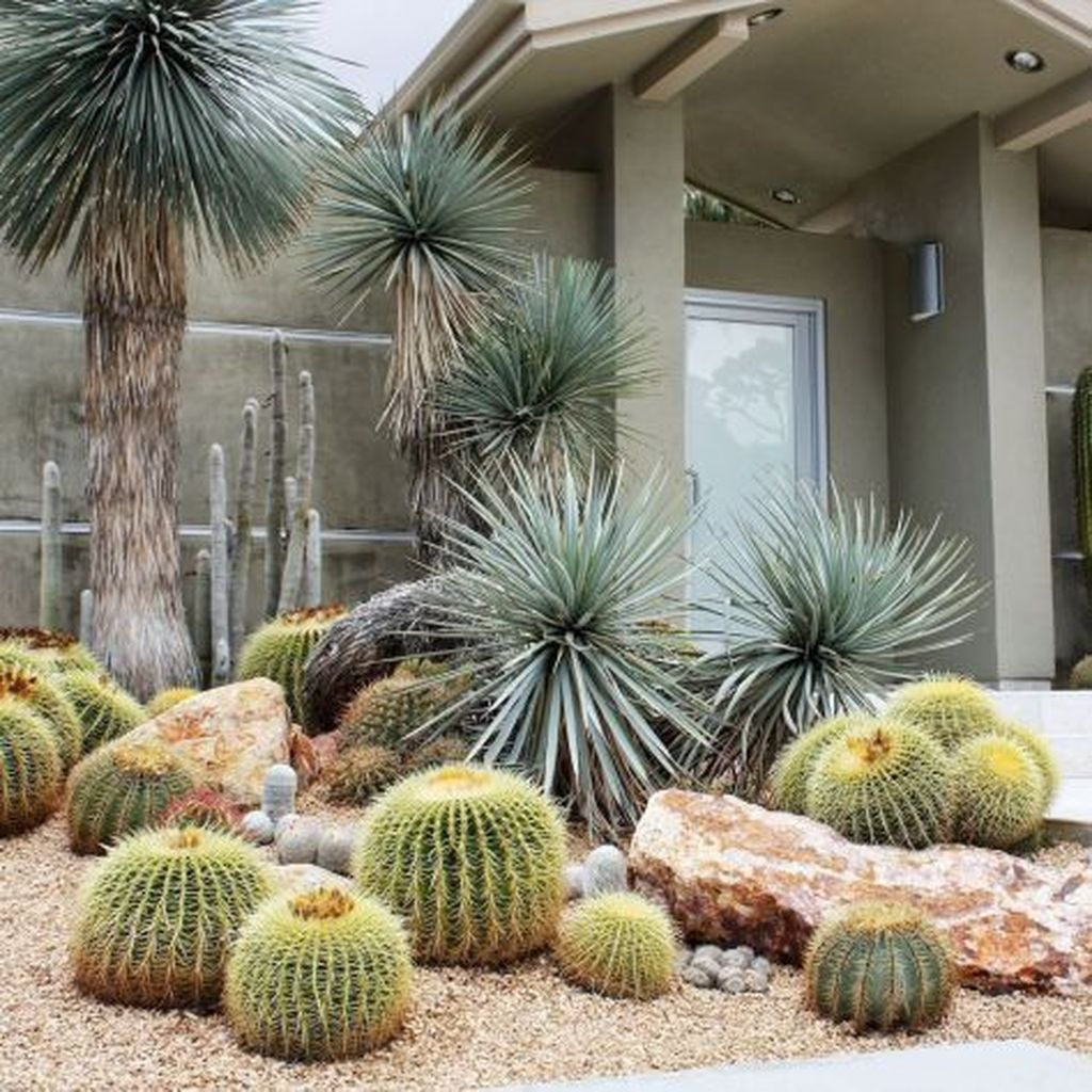 Beautiful Cactus Landscaping Ideas For Your Front Yards Decor 24