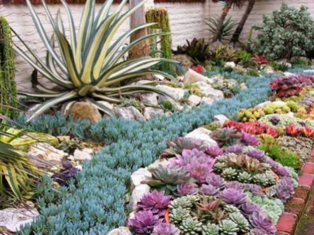 Beautiful Cactus Landscaping Ideas For Your Front Yards Decor 34