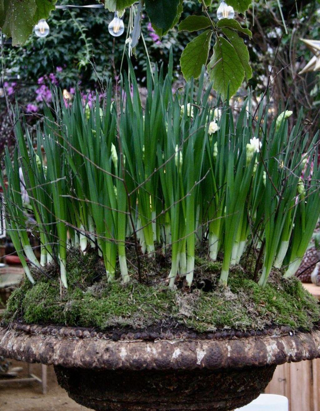 Inspiring Winter Container Gardening Ideas 08