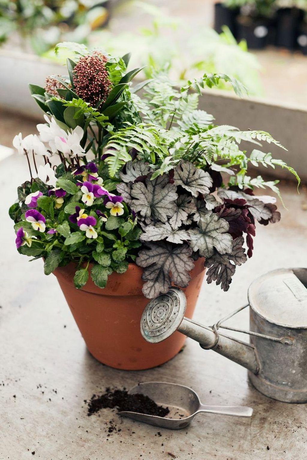 Inspiring Winter Container Gardening Ideas 26