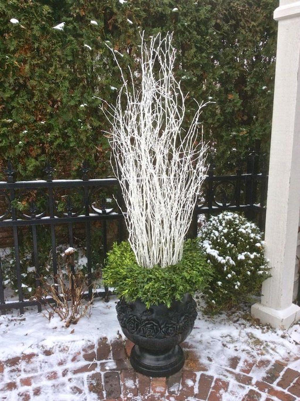 Inspiring Winter Container Gardening Ideas 28