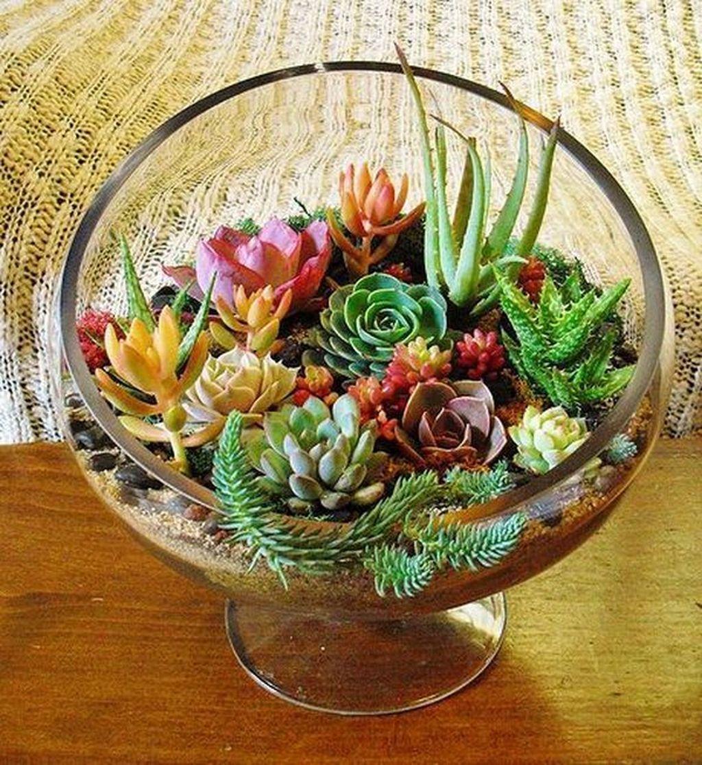 Inspiring Indoor Garden Succulent Ideas 02