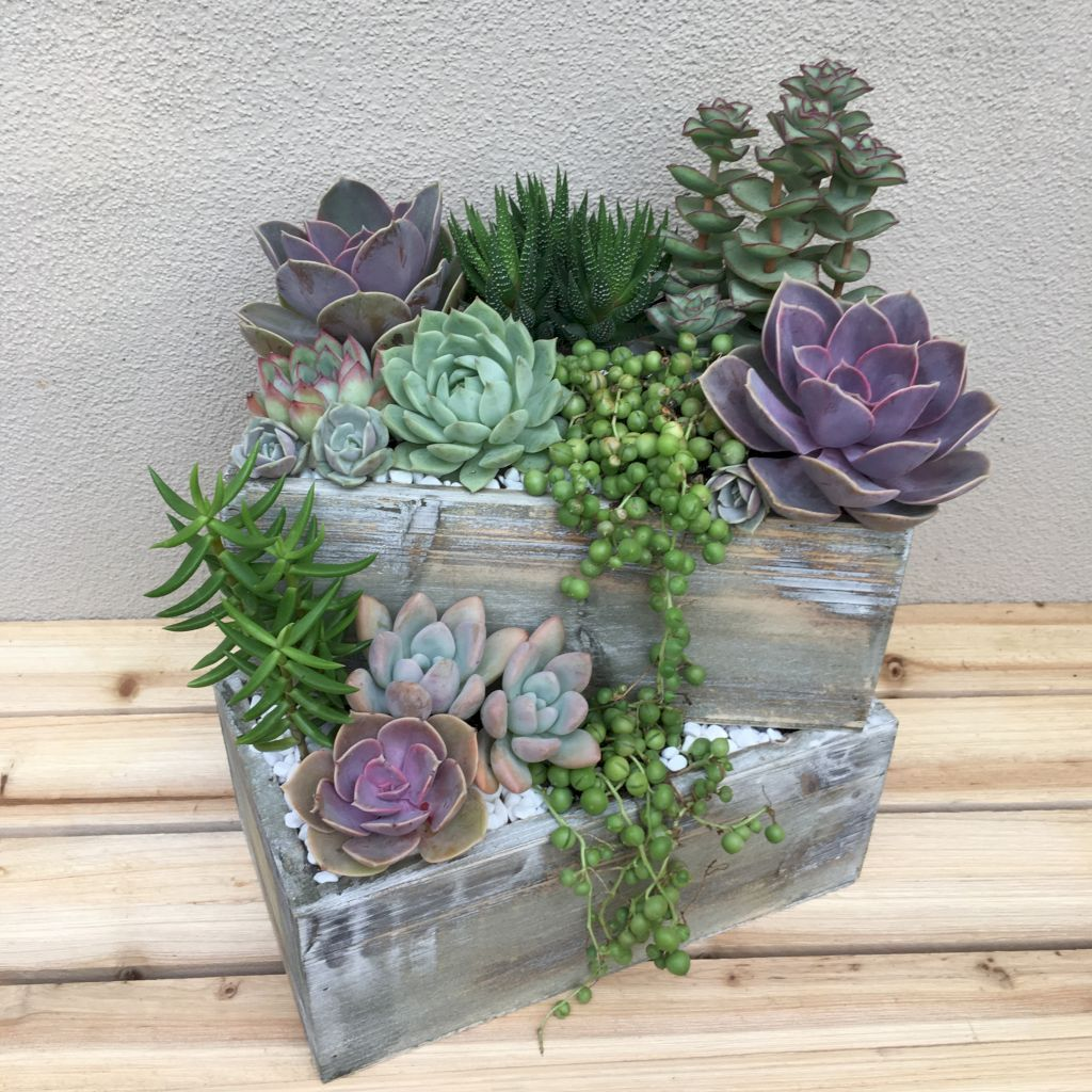 Inspiring Indoor Garden Succulent Ideas 05