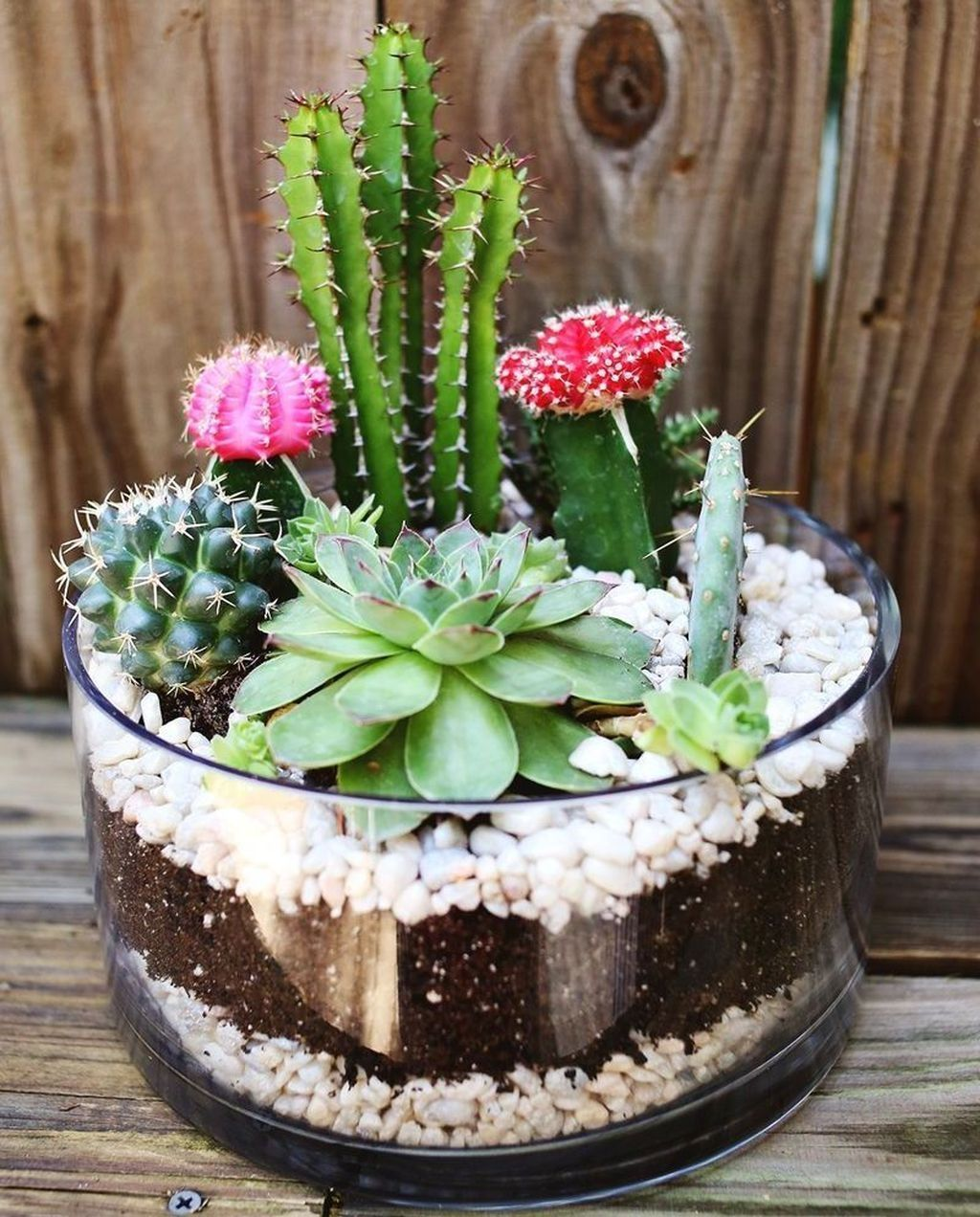 Inspiring Indoor Garden Succulent Ideas 14
