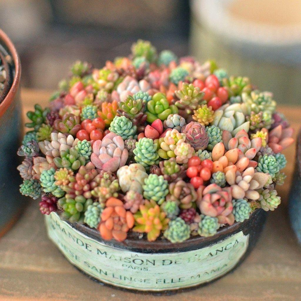 Inspiring Indoor Garden Succulent Ideas 15
