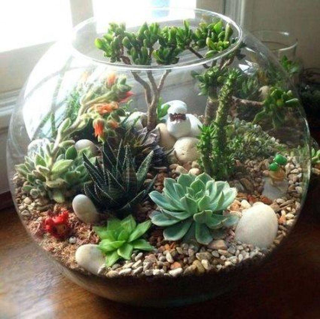 Inspiring Indoor Garden Succulent Ideas 16
