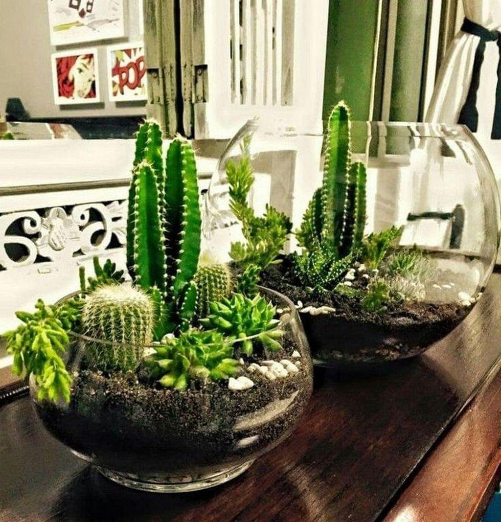 Inspiring Indoor Garden Succulent Ideas 24
