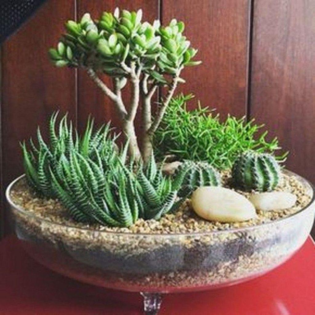 Inspiring Indoor Garden Succulent Ideas 28