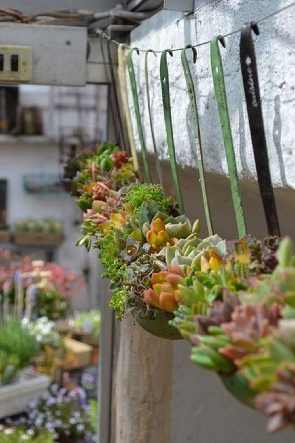 Inspiring Indoor Garden Succulent Ideas 33