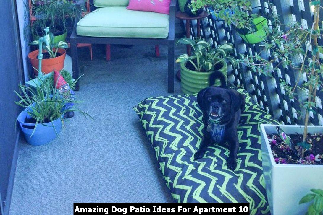 Amazing Dog Patio Ideas For Apartment 10