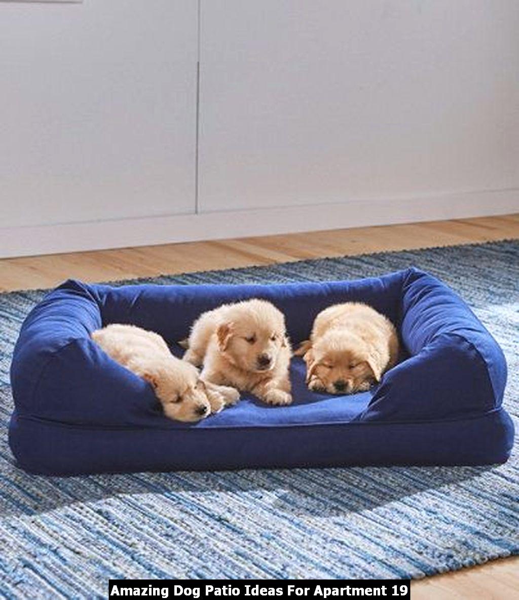 Amazing Dog Patio Ideas For Apartment 19