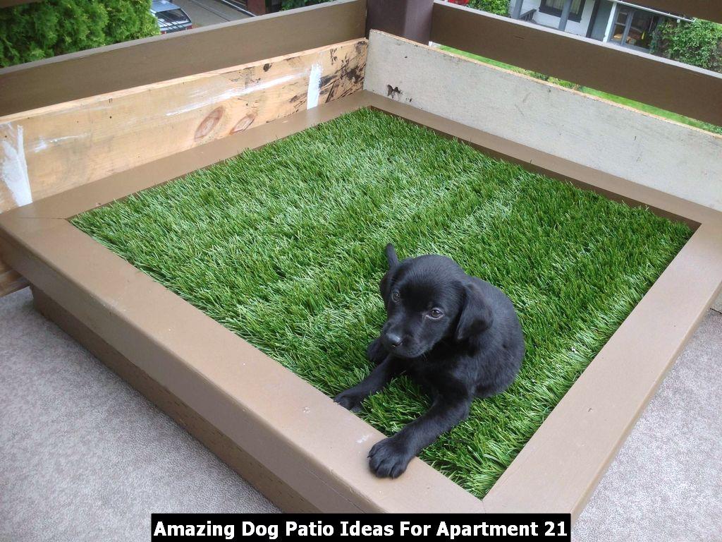 Amazing Dog Patio Ideas For Apartment 21
