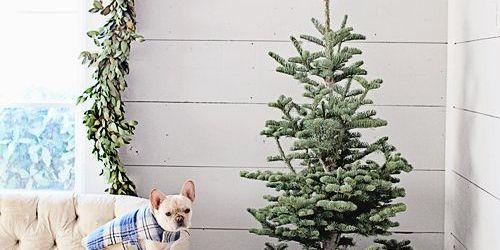 Small Christmas Tree Stand