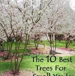 Good Trees For Front Yard