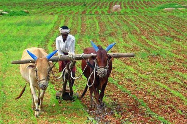 शेतकऱ्यांना पीक विम्याची नुकसान भरपाई द्या