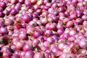 देशात १००० टन कांदा लवकरच आयात