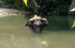 केरळमध्ये अननसात स्फोटकं ठेऊन गर्भवती हत्तीणीला मारणारा तब्बल दीड वर्षानंतर झाला सरेंडर