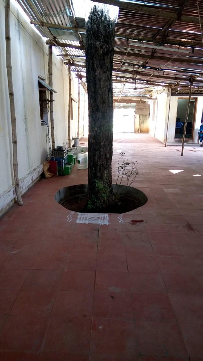 Ilayathangudi Vilva Maram