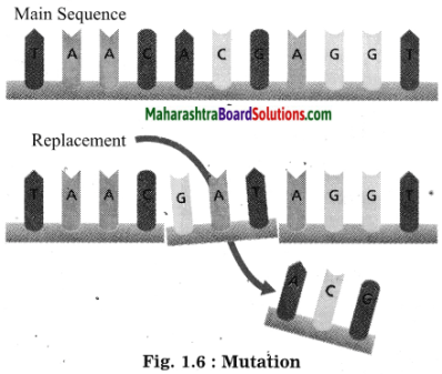 Maharashtra Board Class 10 Science Solutions Part 2 Chapter 1 Heredity and Evolution 5