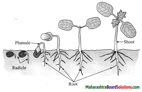 Maharashtra Board Class 10 Science Solutions Part 2 Chapter 2 Life Processes in Living Organisms Part - 2, 19