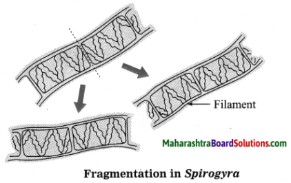 Maharashtra Board Class 10 Science Solutions Part 2 Chapter 2 Life Processes in Living Organisms Part - 2, 21