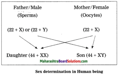 Maharashtra Board Class 10 Science Solutions Part 2 Chapter 2 Life Processes in Living Organisms Part - 2, 25