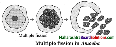 Maharashtra Board Class 10 Science Solutions Part 2 Chapter 2 Life Processes in Living Organisms Part - 2, 3