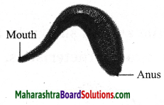 Maharashtra Board Class 10 Science Solutions Part 2 Chapter 6 Animal Classification 14