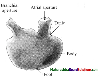 Maharashtra Board Class 10 Science Solutions Part 2 Chapter 6 Animal Classification 20